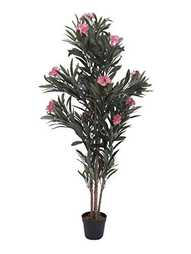 Comparatif des 5 meilleurs Arbuste Fleuri Rose – SOLDE – 53 %