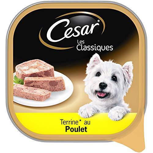 >>> Chien Cesar  test PROMO  – 65 % cliquez Maintenant pour en profiter !